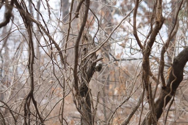 A tree bird