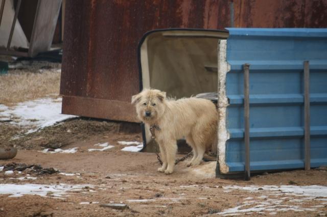 House dog 1 집 개 1
