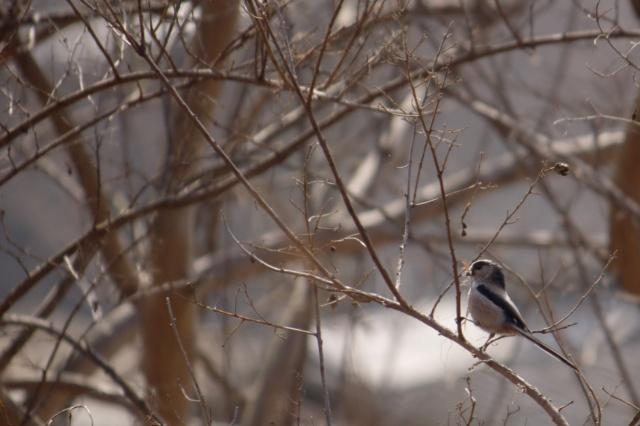 0309_tinybird
